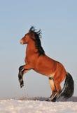 Het paard van de baai in de winter Royalty-vrije Stock Foto