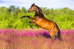 Het paard van de baai het grootbrengen in roze bloemen
