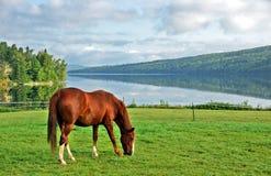 Het Paard van de Berg van Kentucky Royalty-vrije Stock Foto