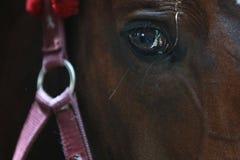 Het paard van de close-up Royalty-vrije Stock Fotografie