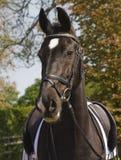 Het paard van de dressuur Royalty-vrije Stock Afbeeldingen