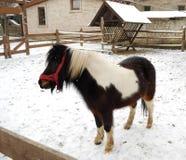Het paard van de poney Stock Afbeeldingen