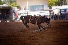 Het Paard van de Rodeo van Bucking royalty-vrije stock afbeeldingen