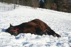 Het Paard van de slaap Stock Fotografie