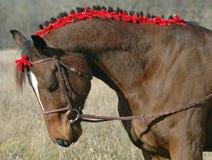 Het Paard van de vakantie Royalty-vrije Stock Foto