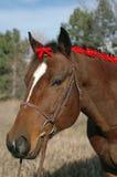 Het Paard van de vakantie Royalty-vrije Stock Fotografie