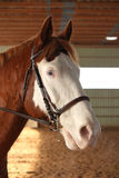 Het paard van de verf stock foto's