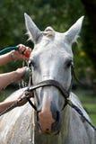 Het paard van de was Stock Foto