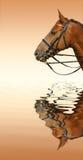 Het paard van de zuring Stock Foto