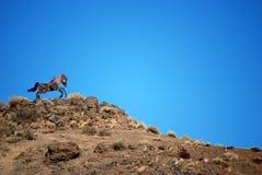 Het Paard van het ijzer Stock Afbeeldingen