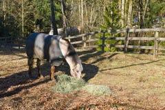 Het paard van het kwart het eten binnen drijft bijeen royalty-vrije stock afbeelding