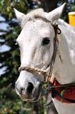 Het paard van het landbouwbedrijf Royalty-vrije Stock Foto's