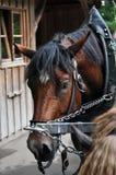 Het paard van het vervoer stock foto