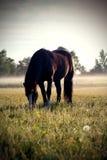 Het paard van het weiland royalty-vrije stock afbeeldingen