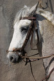 Het paard van het werk Royalty-vrije Stock Afbeelding