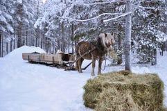 Het paard van Kerstmis Stock Foto