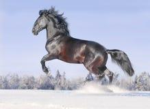 Het paard van Kladrub Stock Afbeelding