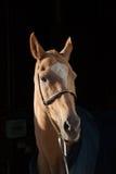 Het paard van Madrid Stock Afbeeldingen