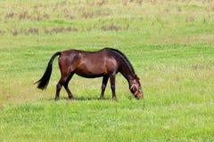 Het paard van Nice Royalty-vrije Stock Afbeelding
