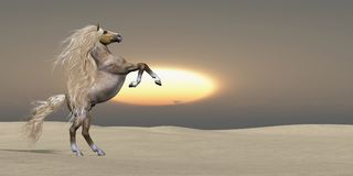 Het Paard van Palomino van het zandduin vector illustratie