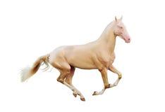 Het paard van Perlino dat op wit wordt geïsoleerdt Stock Afbeeldingen