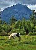 Het paard weidt op een open gebied Stock Foto