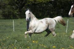 Het paard zet de weide aan stock afbeeldingen