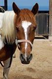 Het paard ziet eruit Royalty-vrije Stock Foto