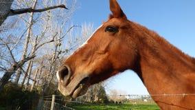 Het paardenhoofd Royalty-vrije Stock Foto's