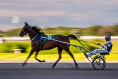Het Paardenrennen van Ottawa stock foto
