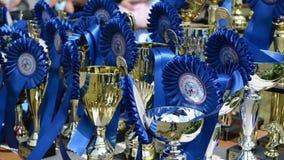Het paardenrennen vormt toekenning tot een kom stock footage