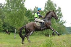 Het paardgalop van de kastanje Stock Foto