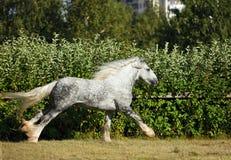 Het Paardhengst van het graafschapontwerp het lopen Royalty-vrije Stock Foto