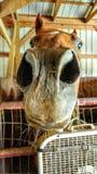 Het paardleven Stock Fotografie