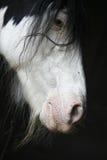 Het paardportret van de blikslager Royalty-vrije Stock Fotografie