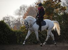 Het paardrijden van de zonsondergang Stock Foto's