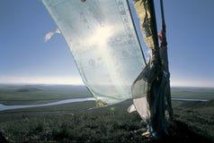 Het paardvlag van de wind in de bron van Gele rivier Stock Fotografie