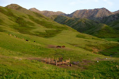 Het paardweiland van de bergzomer Royalty-vrije Stock Fotografie