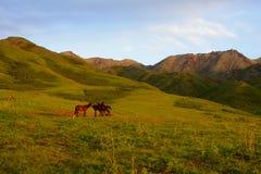 Het paardweiland van de bergzomer Stock Afbeelding