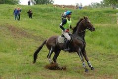 Het paardwoning van de kastanje Royalty-vrije Stock Foto