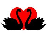 Het paarhart van de zwaan Stock Afbeeldingen