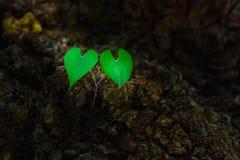 Het paarhart vormde groene bladeren Stock Afbeeldingen