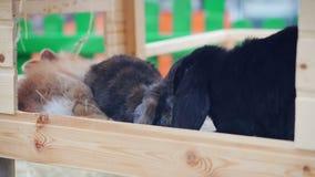 Het paashazenspel, eet, rust in de paddock stock video