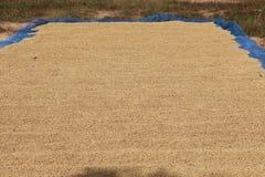 Het paddelen aan de zon in achtervolging Stock Fotografie