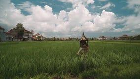 Het padieveld van Bali door huizen met een altaar dat sanggah voor het wordt gegrenst stock footage