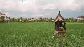 Het padieveld van Bali met een altaar sanggah voor het stock videobeelden