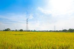 Het padieveld van elektriciteitstorens met de pylonenplatteland van de hoogspanningsmacht stock afbeeldingen