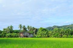 Het padieveld van Thailand Stock Afbeeldingen