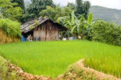 Het padieveld van Vietnam Royalty-vrije Stock Afbeelding