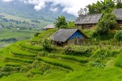 Het padieveld van Vietnam Stock Fotografie